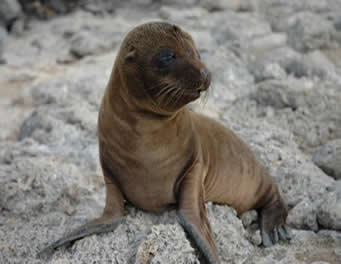 Seal Lion Pups Are Starving in Record Numbers
