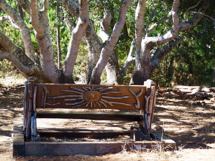 A bench beneath an oak. C. Coimbra photo