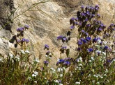 Wildflowers on the rock