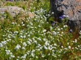 Rock floral