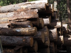 Stacks of wood where there is room