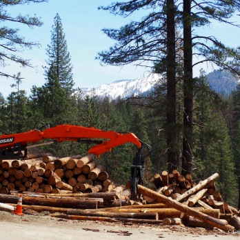 Massive equipment required to manage incoming cut trees