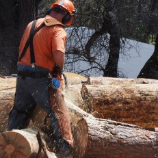 Chain sawing logs to fit on log hauler