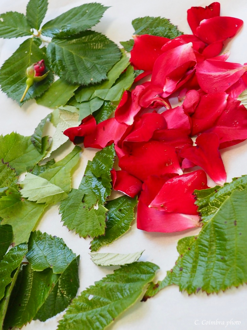 Rose petals and berry leaves