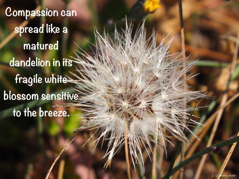 Compassion Like a Dandelion.jpg