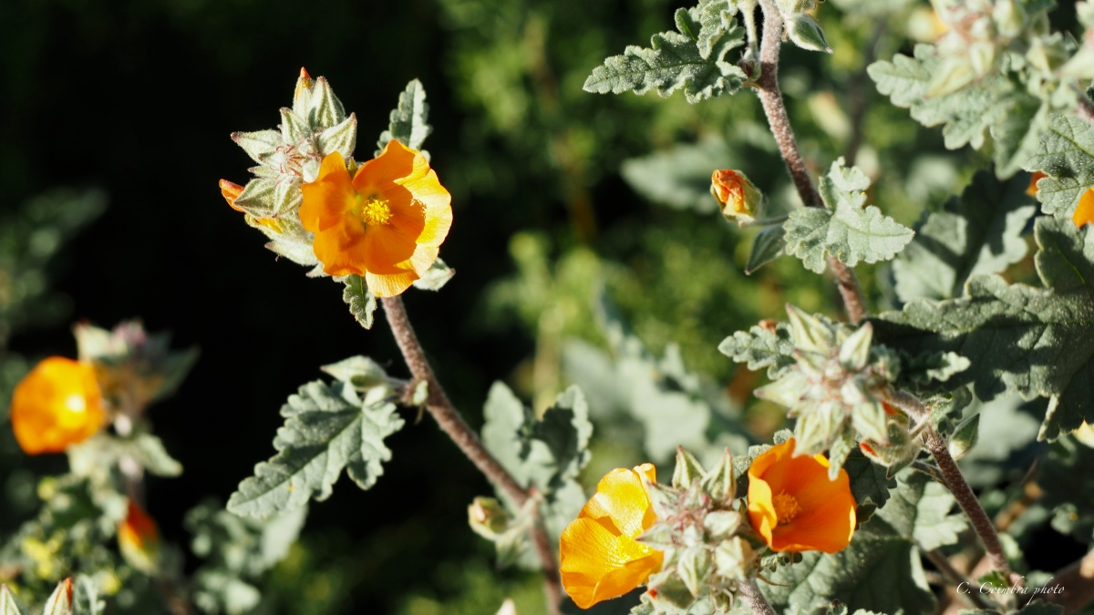 Desert Bouquets--Nature's Gift to the Senses