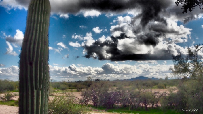Saguaro Clouds