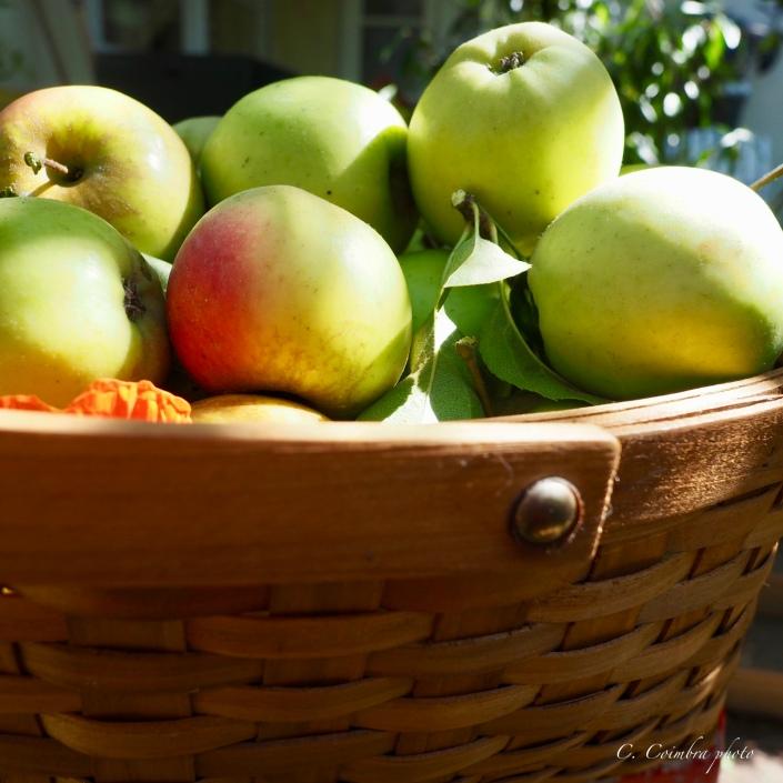 Bobbie's apples