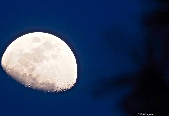 Good Night, Moon.