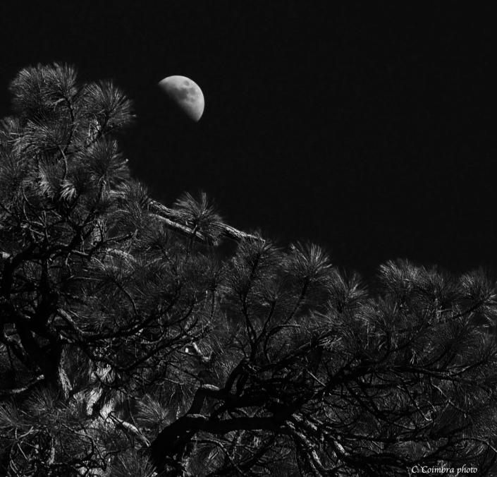 Dark night moon over pine w/sig – Version 2