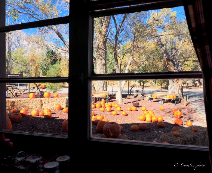 Pumpkins thru a window