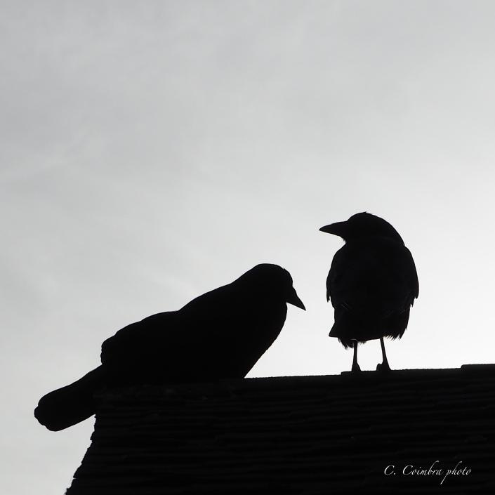 Crow Sillohuet